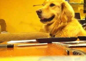 chien_guitare